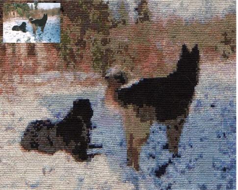 mes chiens dans la neige